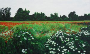 Poppy field near Nemesgörszöny