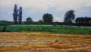 Mowed cornfield and sunflowerfield