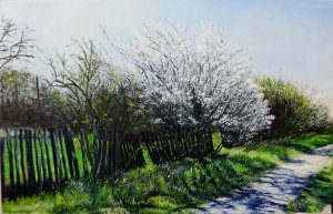 March, blossoming trees