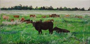 Hungarian Young bulls