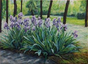 Irisen