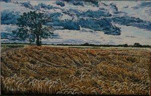 Corn field Rábasebes