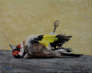 Stil life nr. 5, the dead of a goldfinch