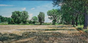 Mowed cornfield, Várkeszö