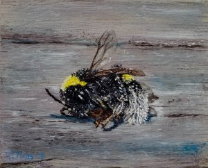 Nature morte no. 11: The bumblebee