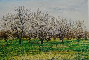 Bloeiende abrikozenboomgaard