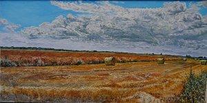 Mowed cornfield Vág-Szil
