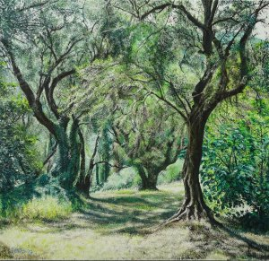The olive garden/wood (memory of Corfu)